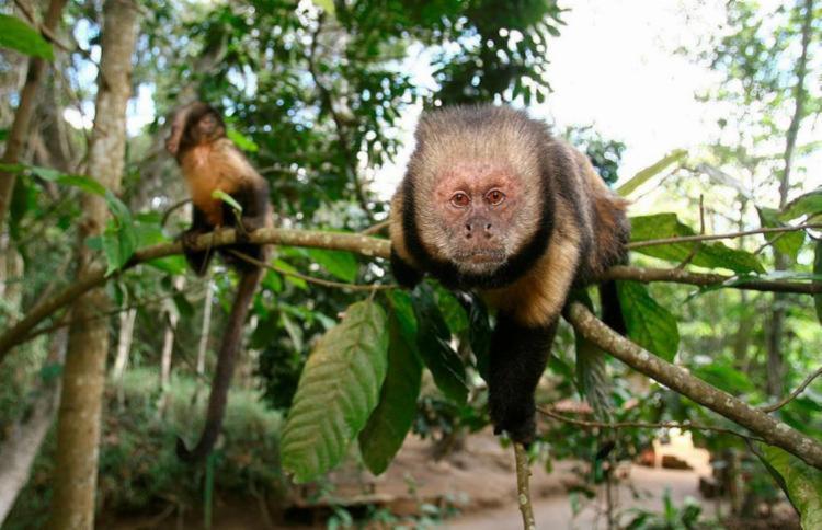 Em 2017, 13 macacos tiveram confirmação de febre amarela em Salvador - Foto: Joá Souza | Ag. A TARDE