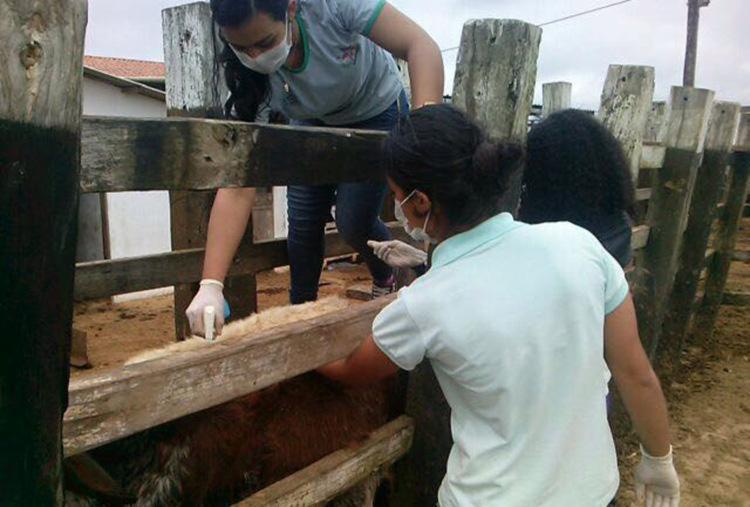Carrapaticida é desenvolvido por estudantes de Maracás para ajudar produtores rurais