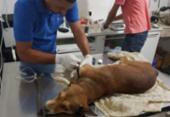 Cão é resgatado após ser abandonado sem comida e água em casa | Foto: Divulgação | SSP-BA