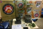 Adolescente de 16 anos é apreendido por cultivar maconha em casa | Foto: Reprodução | Itiruçu Online