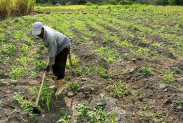 Quatro novos editais de apoio à Agricultura Familiar serão lançados com um investimento de R$ 98 milhões