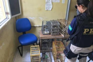 Idoso é flagrado com 110 aves dentro de veículo na BR-324   Divulgação   PRF