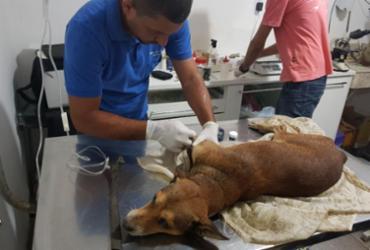 Cão é resgatado após ser abandonado sem comida e água em casa | Divulgação | SSP-BA