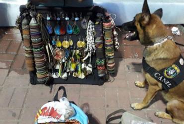 Cadela policial encontra droga com ambulantes na Barra   Divulgação   SSP