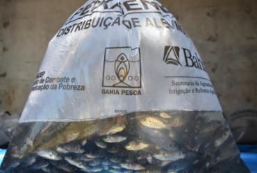 Piscicultores de Valente recebem 60 mil filhotes de tilápia