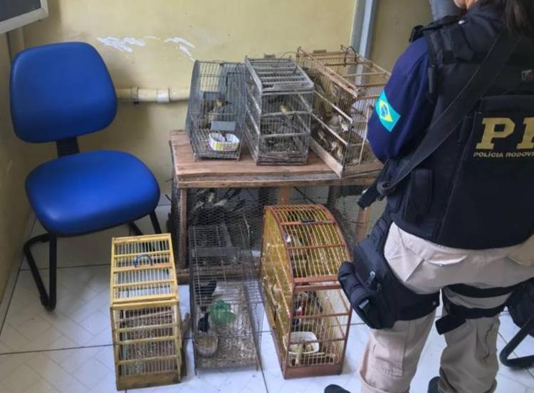 Aves eram de três espécies diferentes: 100 papa capins, 10 cardeais e 4 azulões - Foto: Divulgação | PRF