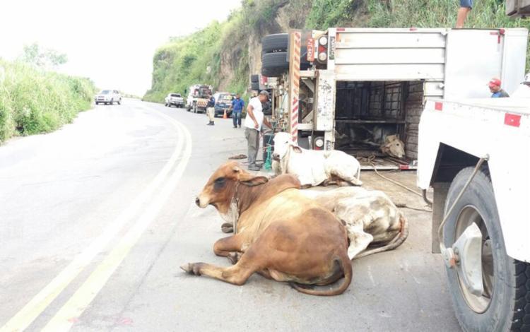 Policiais e vaqueiros tentam retirar animais da rodovia - Foto: Divulgação | PRF