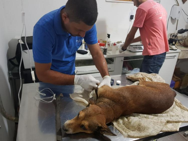 Cão foi levado à Clínica Veterinária Jefferson Carneiro - Foto: Divulgação | SSP-BA