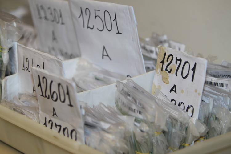 Polícia faz triagem, higienização e cadastro dos documentos perdidos na festa - Foto: Elói Corrêa   GovBA