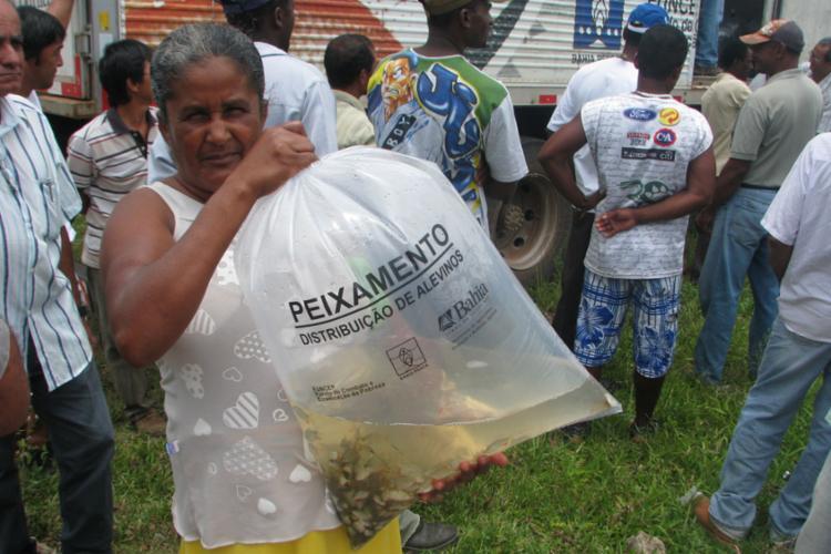 Os alevinos serão doados para 80 famílias da cidade - Foto: Divulgação