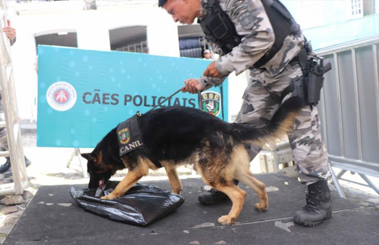 É o primeiro ano que a PM utiliza cães nos portais de abordagem - Foto: Divulgação   SSP