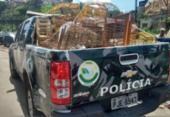 Onze pessoas são flagradas vendendo animais silvestres na Baixa do Fiscal | Foto: Divulgação | SSP