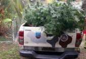 Plantação de maconha é apreendida dentro de casa em Vera Cruz | Foto: Divulgação