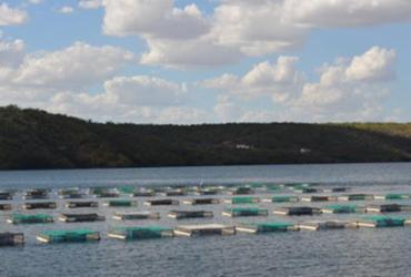 Equipamentos e assistência técnica serão garantidos aos pescadores do Sul da Bahia