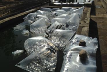 Projetos de piscicultura recebem um novo incentivo