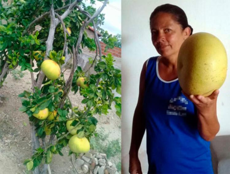 Especialista disse que planta pode ser variação da espécie - Foto: Reprodução | Notícias de Santaluz