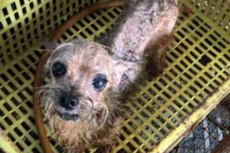 Animais foram encontrados em canil clandestino - Foto: Reprodução
