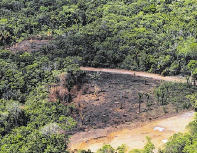 Proposta do senador Flexa Ribeiro (PSDB/PA) permite cultivo em área hoje protegida - Foto: Cristino Martins | Ag. Pará