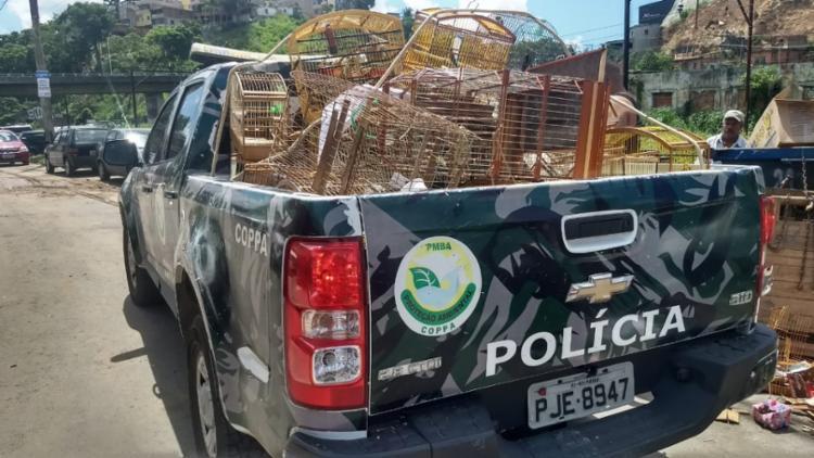Mais de 90 pássaros e seis jabutis foram recuperados - Foto: Divulgação | SSP