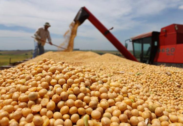 Altamente mecanizada, a soja é exceção em empregos - Foto: Divulgação