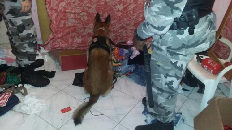 Cães farejadores foram utilizados na ação