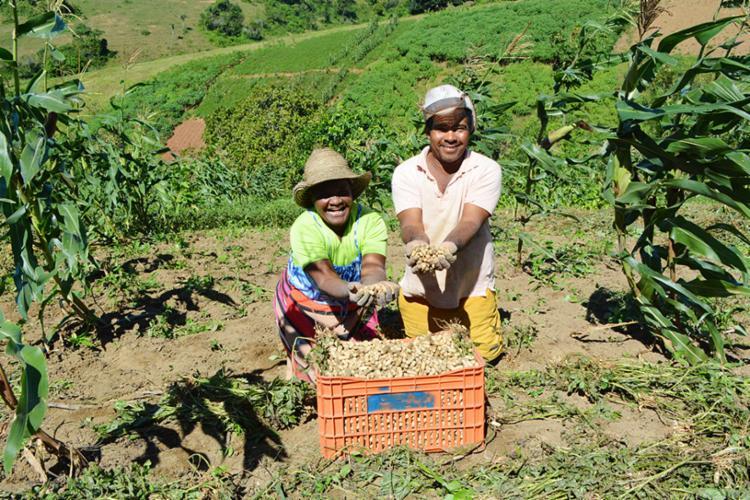 Valor será aplicado nos projetos agrícolas - Foto: Divulgação | Ascom | SDR