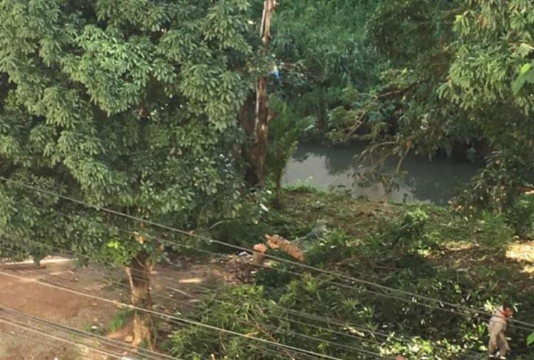 A Bahia é o primeiro estado no ranking de desmatamento - Foto: Cidadão Repórter | Via WhatsApp