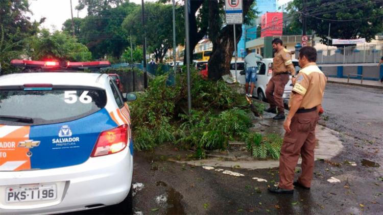Galhos foram retirados por agentes de trânsito - Foto: Divulgação | Transalvador