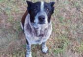 Cão surdo e parcialmente cego ajuda a resgatar criança desaparecida | Foto: Reprodução | Twitter