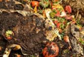 Compostagem reduz em até 70% lixo orgânico | Foto: Reprodução