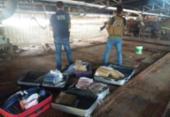 Após apreensões, 150 quilos de drogas são incinerados em Conquista | Foto: Divulgação | Polícia Civil