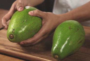 Agricultores de Presidente Tancredo Neves começam a comercializar abacate