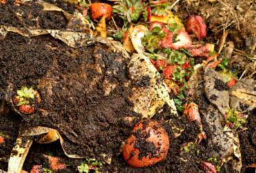 Compostagem reduz em até 70% lixo orgânico | Reprodução