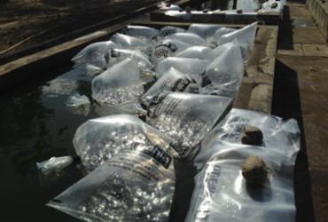 Piscicultores de Poções recebem 60 mil filhotes de peixes