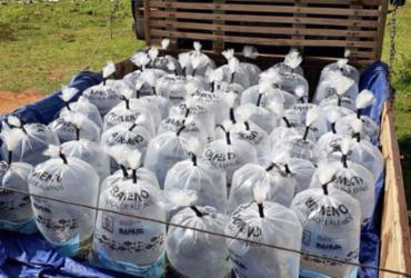 Piscicultores de Santa Maria da Vitória recebem 46 mil filhotes de peixes