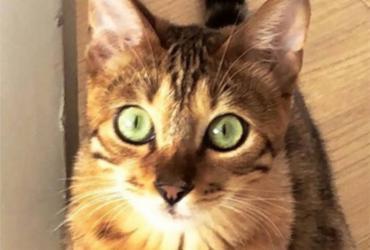Latino adota gato como animal de estimação   Reprodução   Instagram