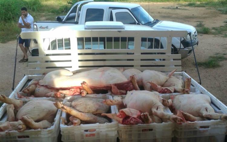 Entre as carnes apreendidas no local, estavam miúdos de boi e carne suína - Foto: Reprodução | Sigi Vilares