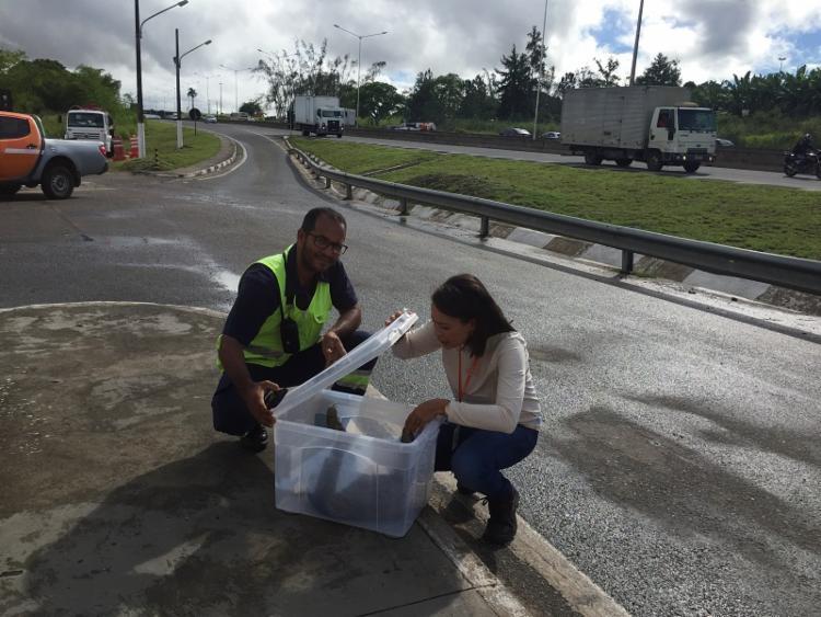 Bicho-preguiça foi encontrado na região de Simões Filho - Foto: Divulgação | ViaBahia