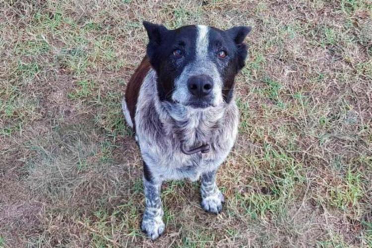 Por mantê-la a salvo, você é agora um cão honorário da polícia, disse a polícia - Foto: Reprodução   Twitter