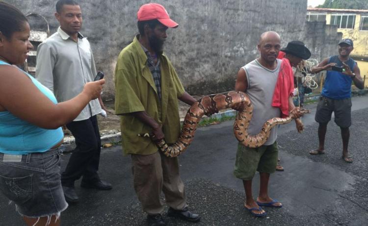 Captura de cobra chamou a atenção de curiosos - Foto: Joyce de Sousa | Ag. A TARDE