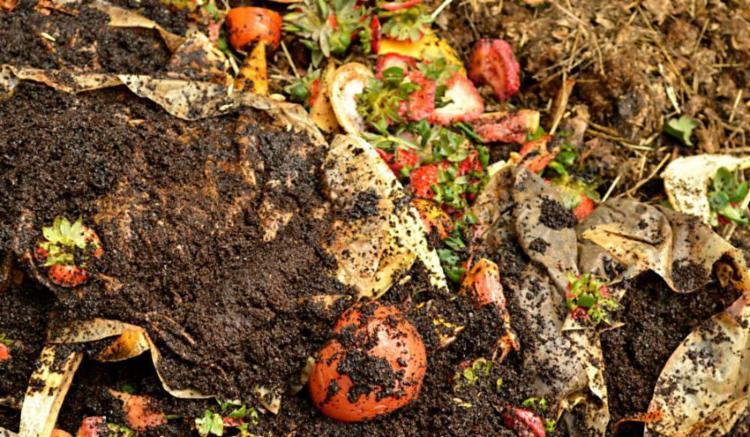 Material orgânico é usado para compostagem - Foto: Reprodução