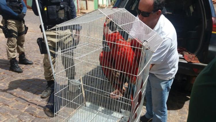 Arara vermelha foi um dos animais resgatados no município de Jaborandi - Foto: Divulgação | MP-BA