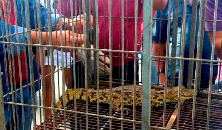 Animal está em boas condições de saúde - Foto: Reprodução   Radar 64