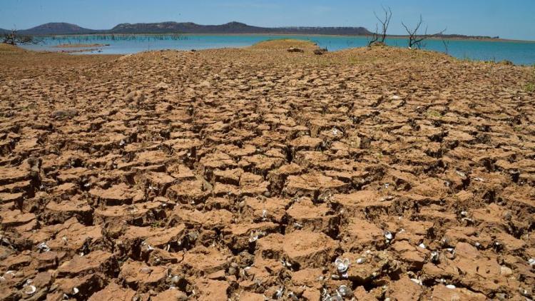 Cientistas alertam que degradação da superfície terrestre está levando o planeta à sexta extinção em massa - Foto: Marcello Casal Jr l Ag. Brasil