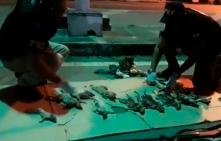 Animais foram encontrados mortos dentro do veículo - Foto: Reprodução | PRF