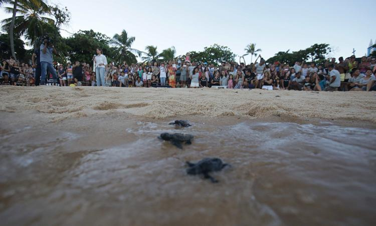 Na Bahia, a comemoração aconteceu na base do projeto na Praia do Forte - Foto: Igor Andrade l Ag. A TARDE
