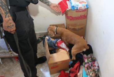 Cão fareja drogas na casa de suspeito de liderar tráfico na RMS   Alberto Maraux   Divulgação   SSP-BA