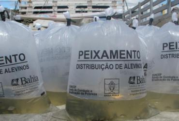 Piscicultores de Paramirim e Ouriçangas recebem 35 mil peixes