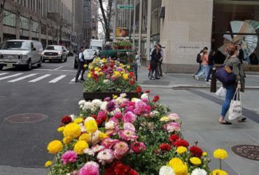 Nova York em clima de primavera
