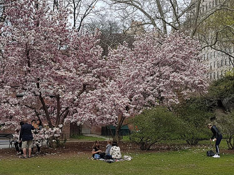 No Central Park, as famílias se reúnem para fazer passeios e piqueniques
